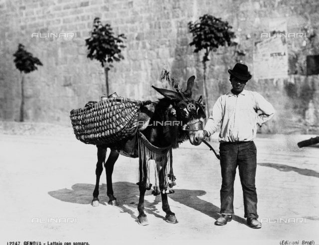 Milk-man with his donkey in Genoa