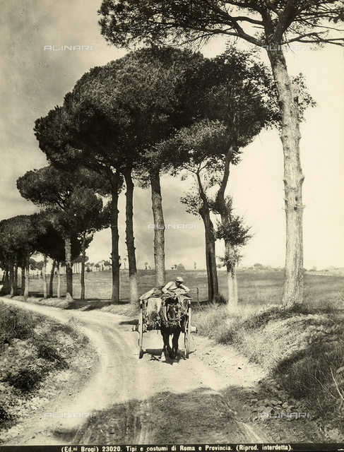 A man on a carriage guiding his horse along a country road in the environs of Rome.