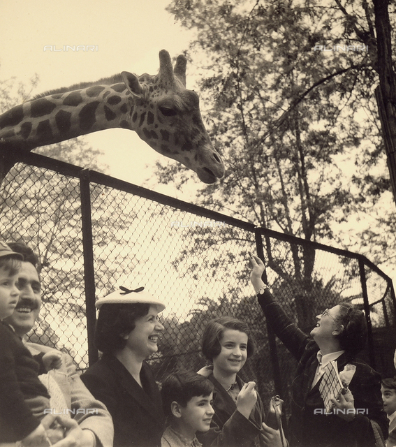 Family at the zoo in front of the giraffe pen.