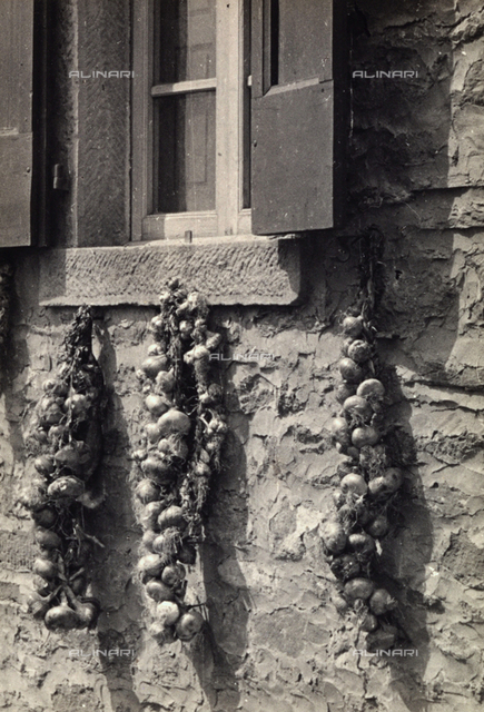 Garlic hanging at the hall of a house