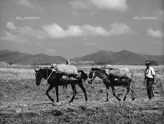 Farmer with horses