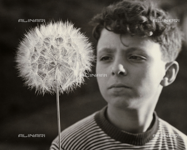 A boy that looks at a dandelion