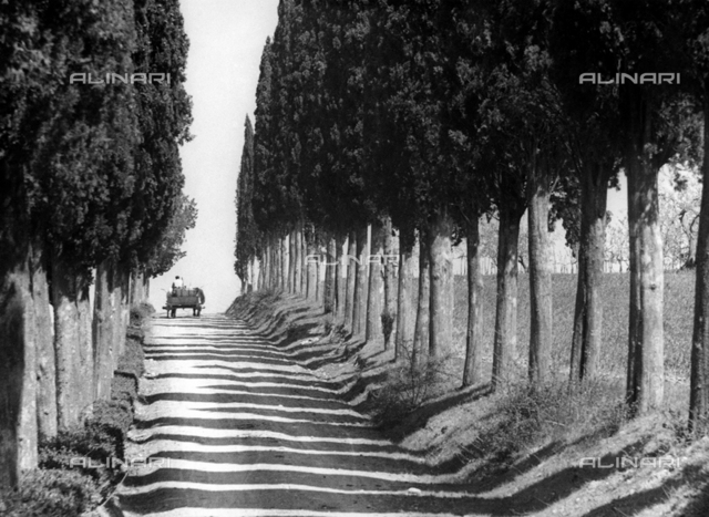 Country road with cypresses