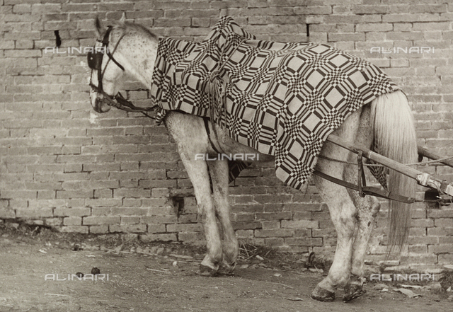 Harnessed horse attached to a cart
