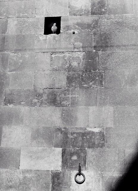 Pigeons in a hole in the wall of the Bargello palace in Florence