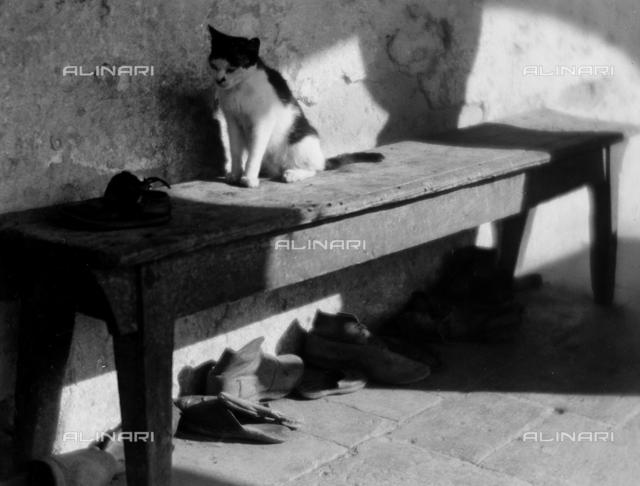 Cat on bench; photo studio