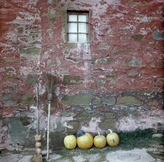 Pumpkins, San Polo in Chianti