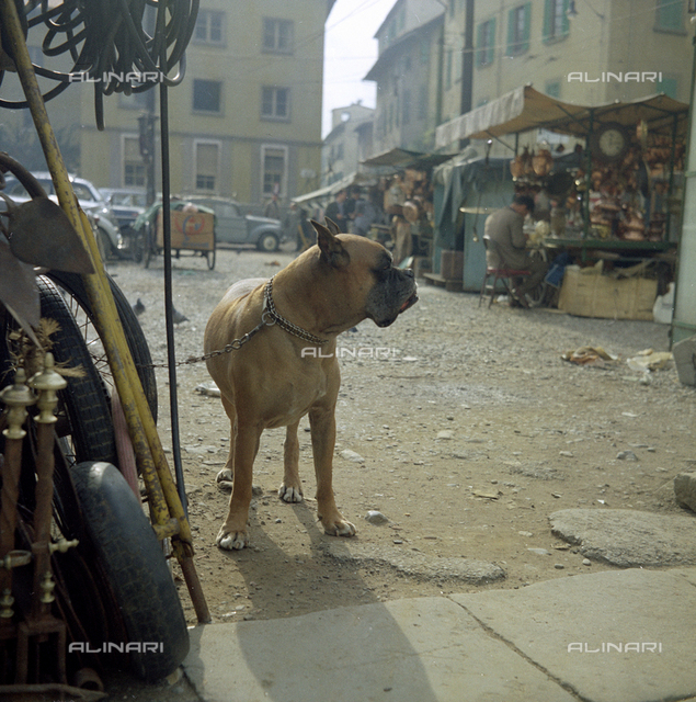 Dog and junk dealers, Florence