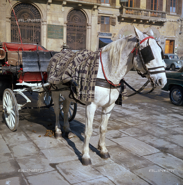 Carriage, Florence