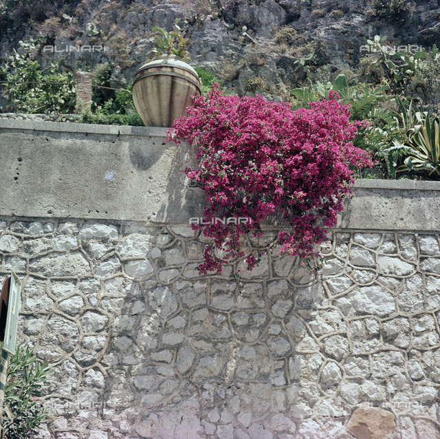 Flowers of Taormina