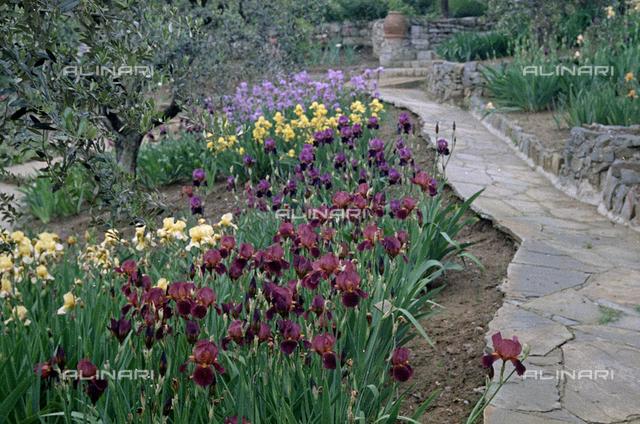 Iris garden, Florence