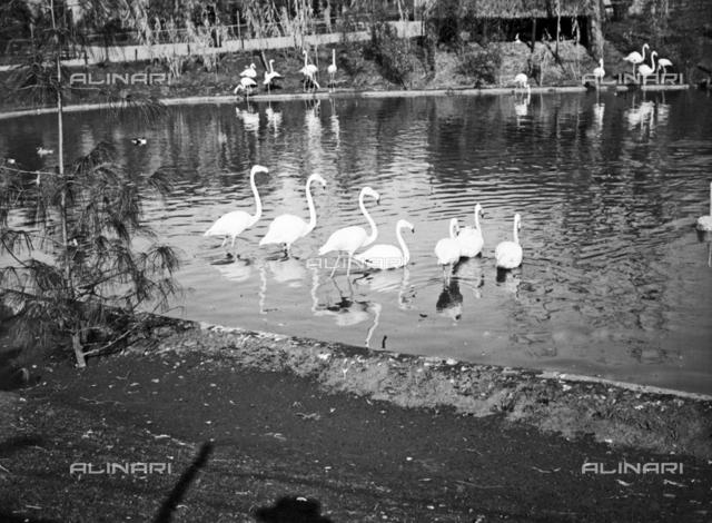 Zoo of Rome: the lake with flamingos