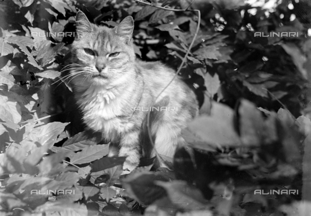 Portrait of a cat among the leaves