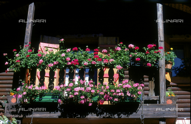 Geraniums in bloom on the balcony of a mountain house