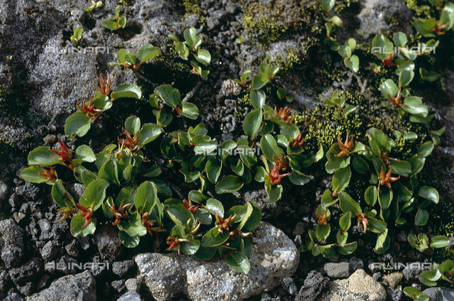 Vegetation from the morainal plateau in Iceland