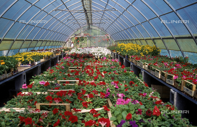 Interior of a greenhouse for flowers