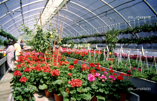 Interior of a floral greenhouse
