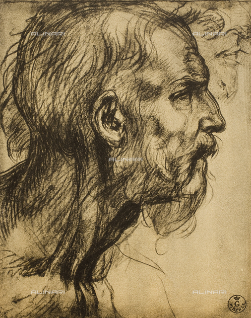 Drawing with male profile, by Andrea del Sarto in the Uffizi Gallery, in the Gabinetto dei Disegni e delle Stampe