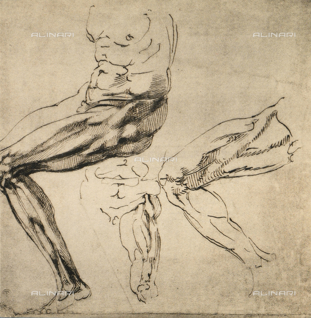 Study of masculine limbs; drawing by Michelangelo. Casa Buonarroti, Florence