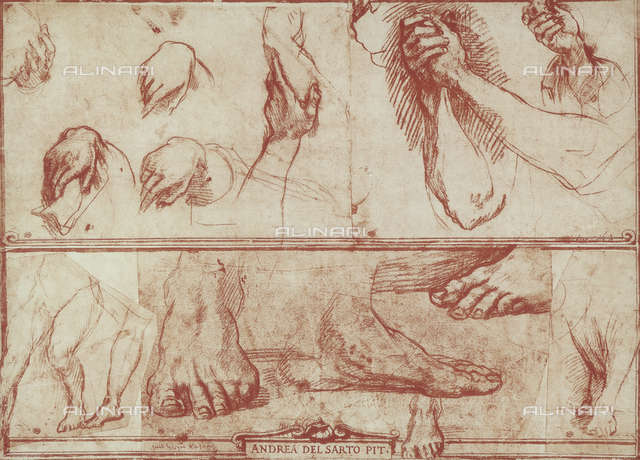 Study of hands and feet, The Louvre, Paris