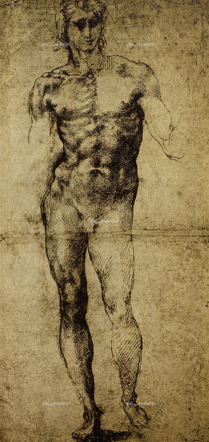 Study of a male nude, drawing, Michelangelo Buonarroti (1475-1564),  Paris, Louvre Museum