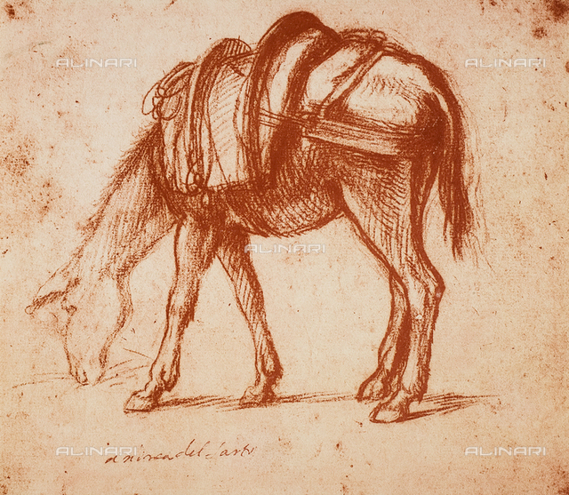 A mule, drawing by Andrea del Sarto, British Museum, London