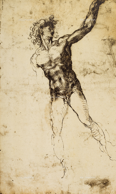 Male nude; study by Michelangelo. British Museum, London