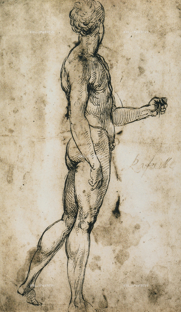 Study for the figure of a nude man, rear view, Raphael, British Museum, London