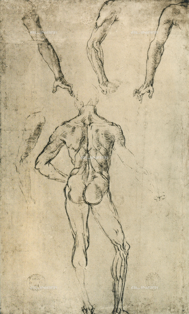 Study of anatomy, Raphael, British Museum, London