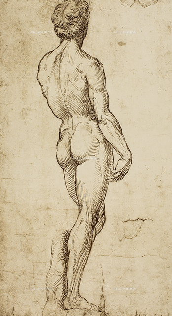 Male nude seen from the back; drawing by Raphael. British Museum, London