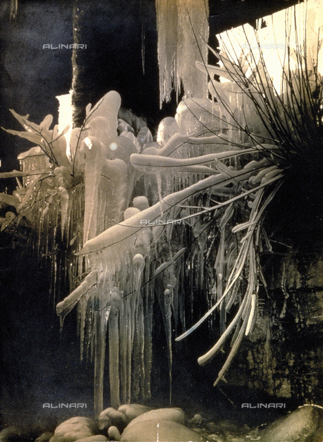 Branches and stems of plants covered with ice
