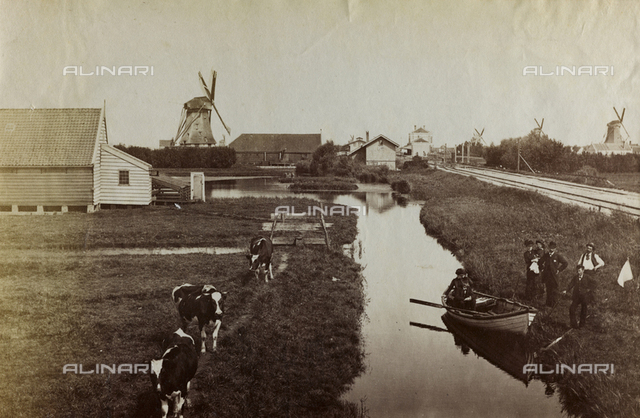 Typical Dutch agricultural landscape with cows at pasture and windmills