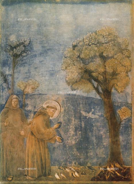 Saint Francis preaching to the birds, Upper Church, Basilica of San Francesco, Assisi