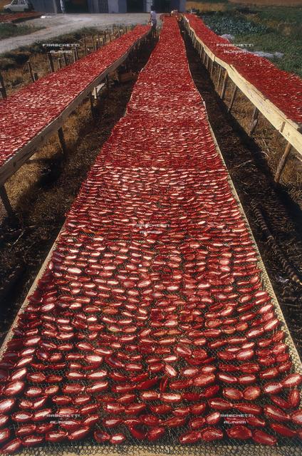 Sila, essiccatura dei pomodori sottolio