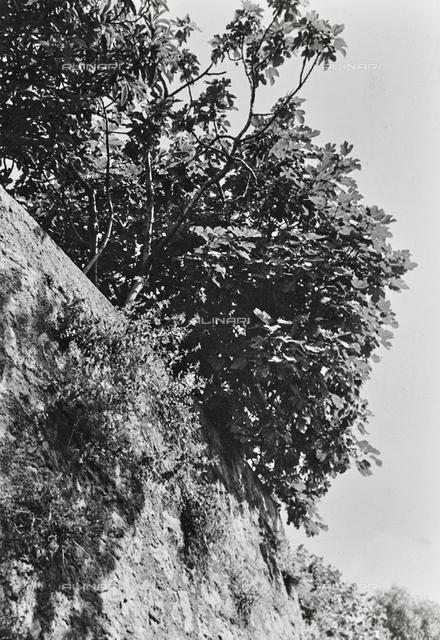 Wall with tree in Torbole in Trentino Alto Adige