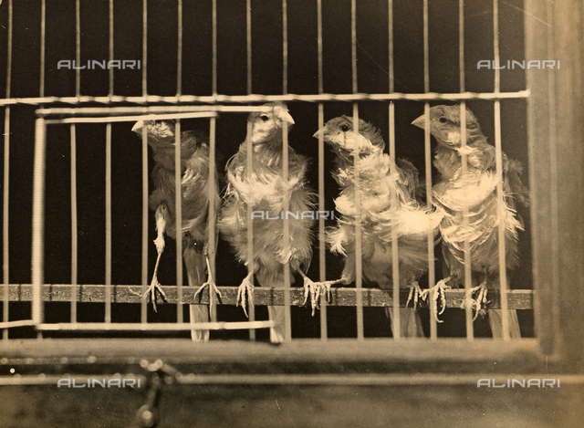 Caged canaries