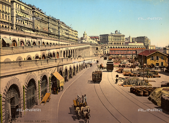 View of the city of Algiers, with the great avenue crossed by carts.