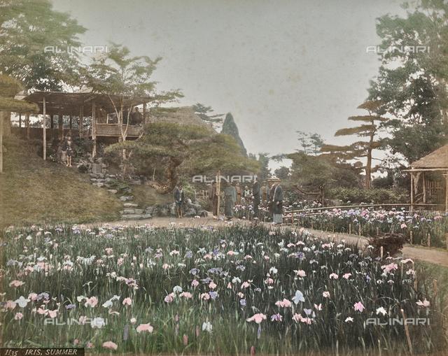 Iris Horikiri Garden in Tokyo, Japan
