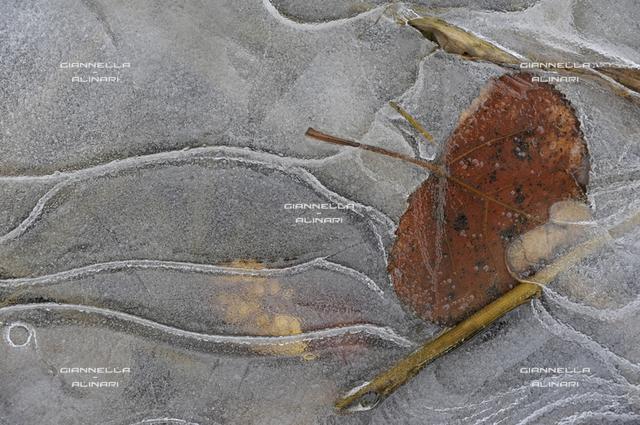 Ice Frost, ice