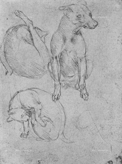 """Study of dog and cat (Inv. 1895-9-15-477), drawing by Leonardo da Vinci (1452-1519) preserved in the British Museum of London, from """"The Drawings of Leonardo da Vinci"""" (New York, 1945)"""