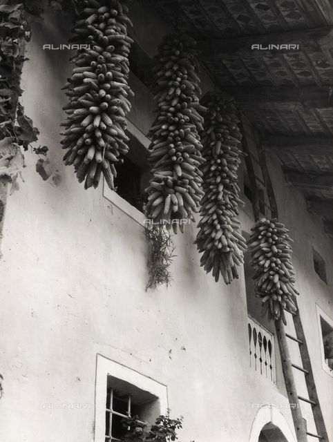 """In Solvenia"". Corn cobs hung in front of a house with a ladder leaning against it"