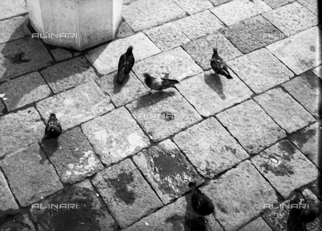 Pigeons on the streets of Venice