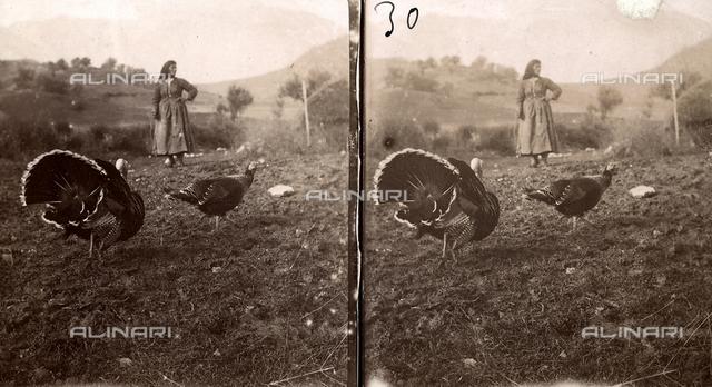 Two turkeys in a field. A farmer is in the background.