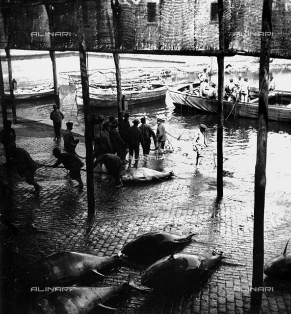 Fish market in Acireale