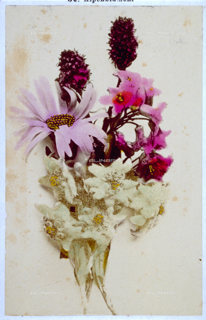 Small bunch of flowers, composed of edelweiss, rhodendrons, a leontopodio and a few nigelle.