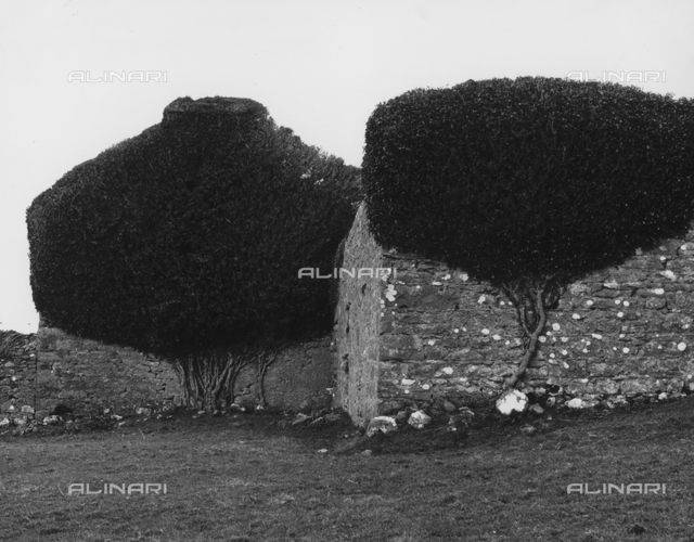 Trees leaning against the walls of Doorus Park in Kinvara