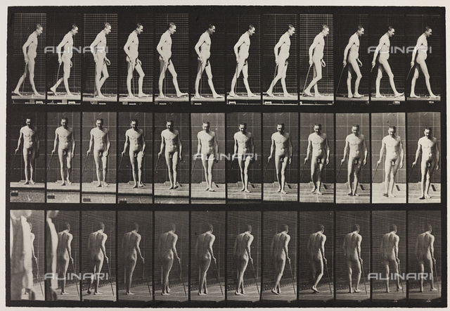 """""""Animal Locomotion"""" (plate 559): sequence with a naked man walking"""