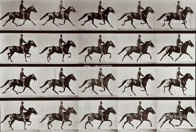 """Animal Locomotion"" (plate 591): sequence with jockey on horseback"
