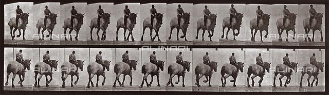 """Animal Locomotion"" (plate 599): sequence with jockey on horseback"