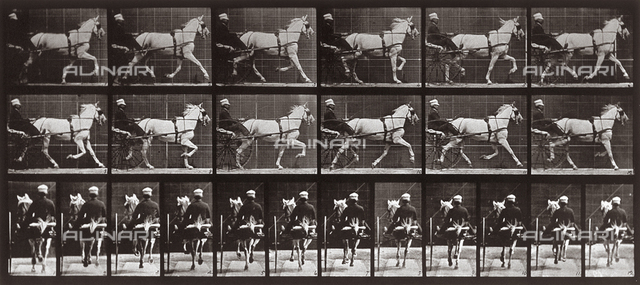 """Animal Locomotion"" (plate 611): sequence with jockey on a gig pulled by a trotting horse"
